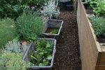 TeichPflanzen.jpg