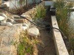 Wiedereinrichtung des kleinen Teichs, Sand als Substrat.JPG
