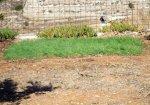 Gartensanierung,  kleine Versuchsfläche.JPG