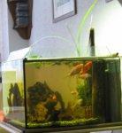 Goldfischschwarm.jpg