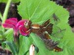 Libelle heute Mittag.jpg