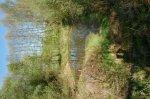 Teich 1.jpg
