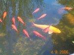 Fisch2006-8.JPG