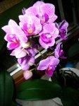 orchidee1.jpg
