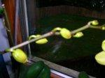orchidee3.jpg