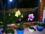 orchidee4.jpg