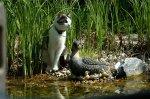 Cilli bei Ente.jpg